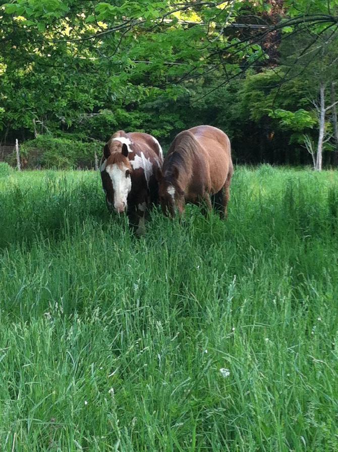 NEW! Pony Rides & Petting Zoo